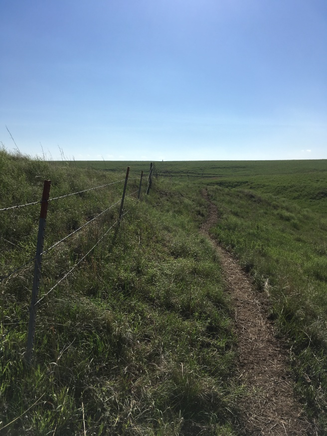 Willa Cather Memorial Prairie #2